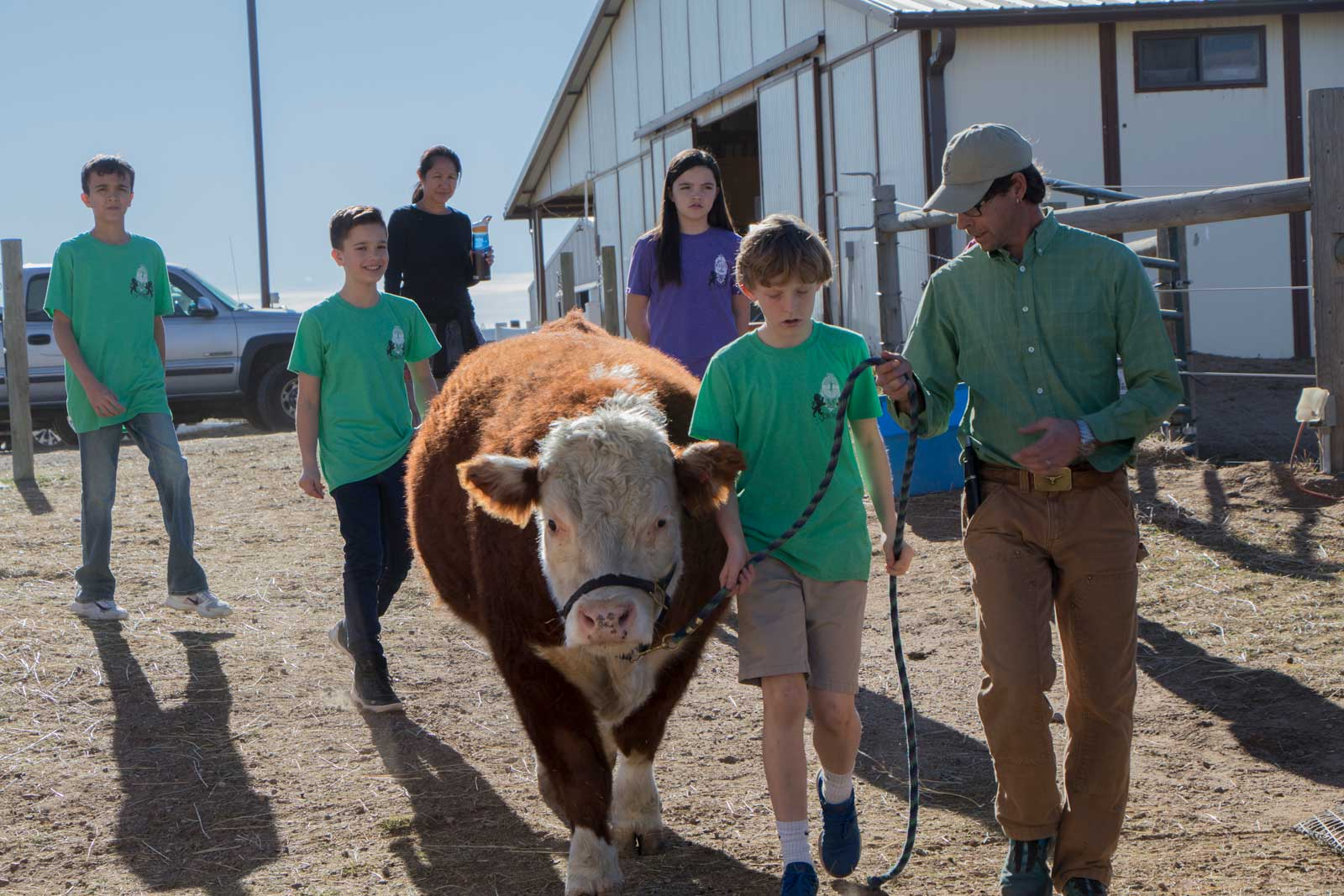 A kid and an adult farmer walking a cow as other kids watch